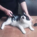 Katze Bioresonanz Check