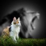 Mittels Bioresonanzanalyse über Tierhaare die Tiergesundheit checken.