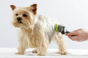 Bioresonanzanalyse für Tiere mittels Tierhaaren