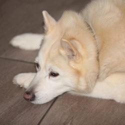 Gibt es Depressive Hunde