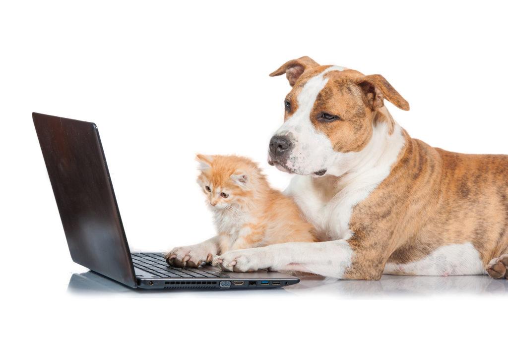 Über unsere Analysemöglichkeiten finden wir die wahren Krankheit Verursacher. Somit haben Sie die Möglichkeit die Hilfe zu geben die Ihr Tier braucht.