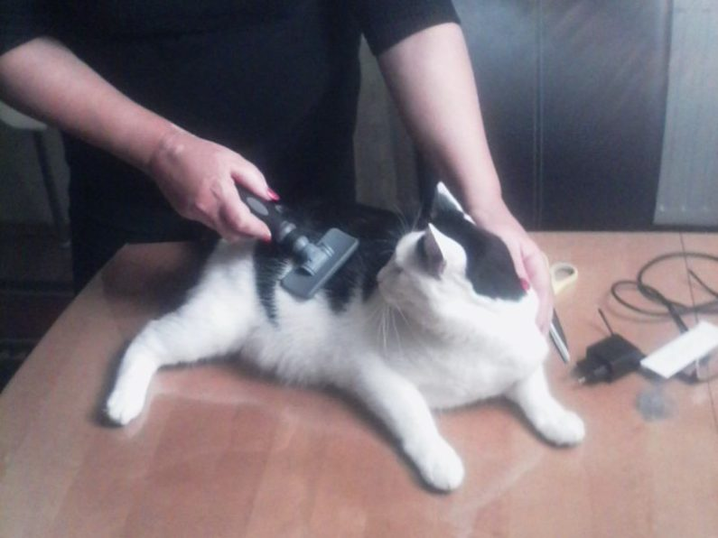 Katzen mögen es gebürstet zu werden