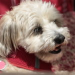 Hunde Nase kann Waerme wahrnehmen